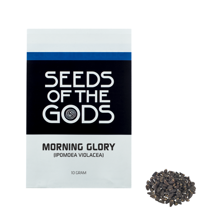 morning glory ipomoea violacea seeds of the morning glory ipomoea ...